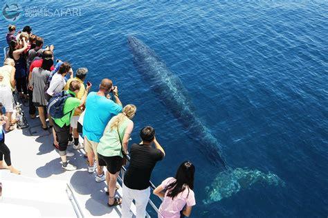 Filewhale Watching  Auckland, New Zealandjpg