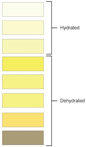 urine colors chart meaning  pee color smell
