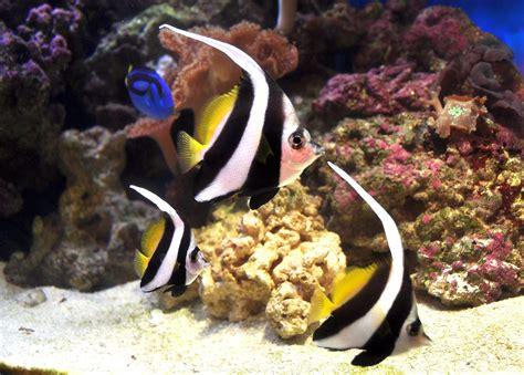 saltwater aquarium fish species cpt nemos tank