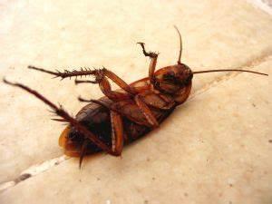 Kakerlaken Im Garten : auch kakerlaken k nnen sich ekeln ~ Whattoseeinmadrid.com Haus und Dekorationen
