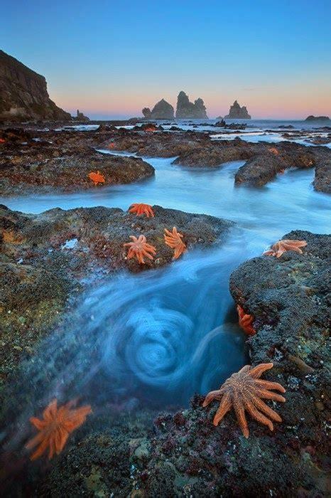 Starfish Colony South Island New Zealand Fantastic