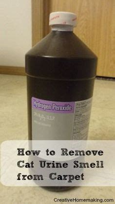 Remove Cat Urine Smell From by 1000 Images About Stop Cats From Spraying On
