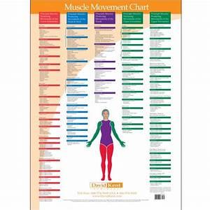 Tmj Chart Trigger Point Charts 5 Chart Set Kent Health Systems