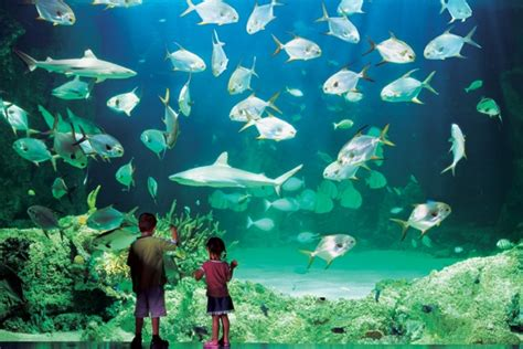 world visits sydney aquarium one of the greatest aquariums in the world
