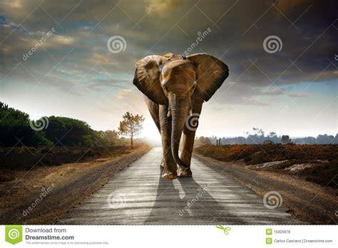 walking elephant royalty  stock image image