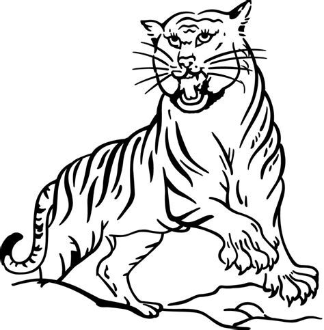 printable tiger coloring pages  kids