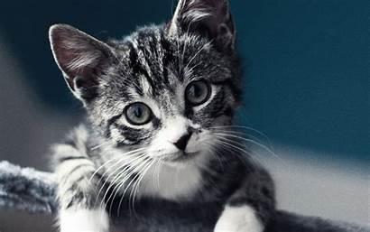 Cat Animal Nature Mi35 Macbook Papers Pro