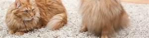 Nettoyage De Tapis : nettoyage et lavage de tapis de laine nettoyeur de la cit ~ Melissatoandfro.com Idées de Décoration