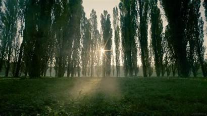 Nature Sun Forest Mist Sunrise Stills Cinemagraph