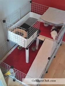 Cage A Cochon D Inde : cavy cage cochon d 39 inde cochon d 39 inde pinterest ~ Dallasstarsshop.com Idées de Décoration