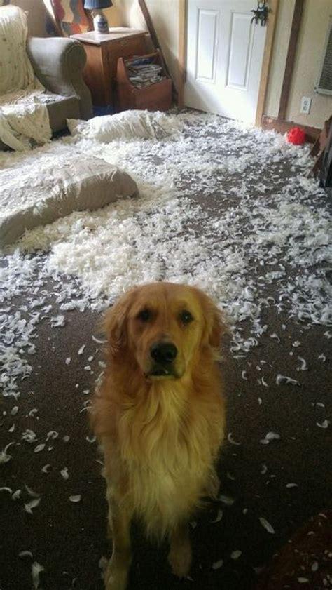 dogs   suspicious barnorama