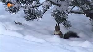 Grillparty Im Winter : eichh rnchen im winter youtube ~ Whattoseeinmadrid.com Haus und Dekorationen