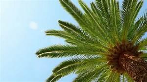 Palmen Für Den Garten : palmen garten ratgeber ~ Sanjose-hotels-ca.com Haus und Dekorationen