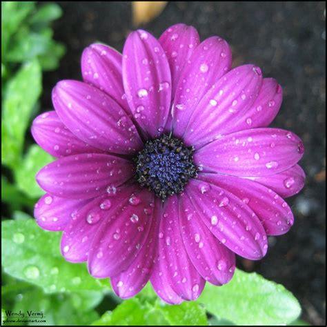 purple flowers purple flower i by ydnew on deviantart