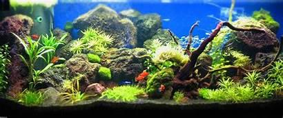 Aquascape Ultra Wide 3440 1440 Ultrawide Widescreen
