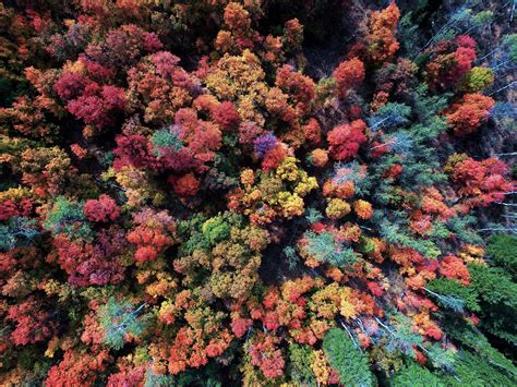 aerial view  autumn forest  ultra hd wallpaper