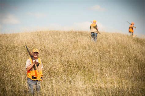 roundup ringneck pheasants hunt crops harvested colder becomes weather into