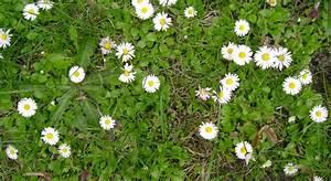 Unkraut Weiße Blüte : unkraut oder wildkraut industrieverband agrar ~ Lizthompson.info Haus und Dekorationen