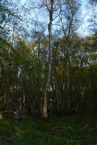 wetland trees trees in wetland 169 ds pugh geograph britain and ireland