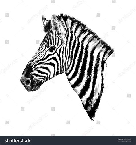 Zebra Head Profile Sketch Vector Stock Vector 585596087
