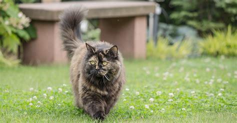 zeckenschutz fuer katzen gute zeckenmittel fuer katzen