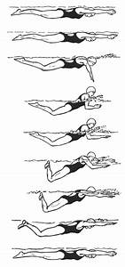 Biomechanical Considerations In The Competitive Swimmer U2019s