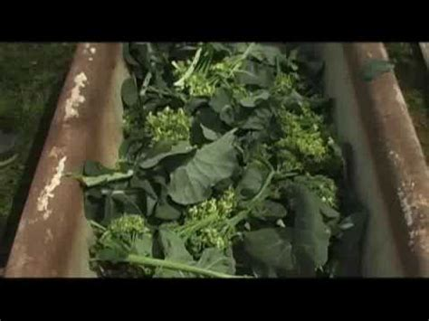 starting  worm bed growing  vegetable garden youtube