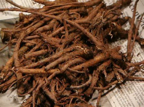 Chicory Root Coffee – What is Chicory Coffee and How to Make It
