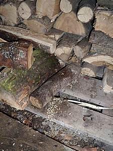 Ratten Bekämpfen Im Garten : ratten bek men bei befall im brennholz lager ~ Michelbontemps.com Haus und Dekorationen