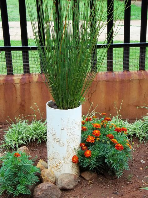 grasses for containers gardening in africa ornamental grasses in the garden