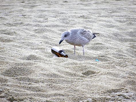 Pollution Triggers Bizarre Animal Behaviors That Could