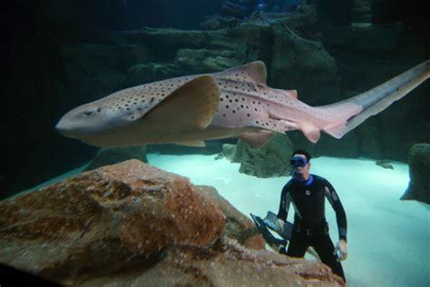 en apn 233 e au milieu des requins pour plaider leur cause