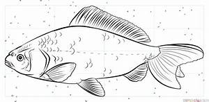 How to draw a koi fish | Step by step Drawing tutorials