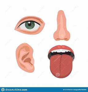 Mouth Anatomy Vector Illustration