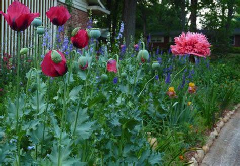 Wie Gestalte Ich Meinen Garten Neu by Wie Gestalte Ich Meinen Garten Im Italienischen Stil