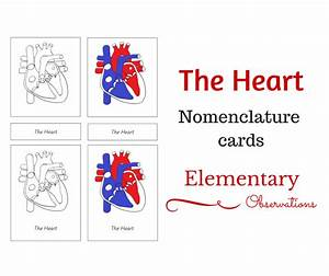 Free Heart Nomenclature Cards From Elementary Lolly