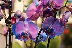 Orchideen Umtopfen Wurzeln Schneiden : orchideen schneiden 8 wege zur strahlenden bl tenpracht ~ A.2002-acura-tl-radio.info Haus und Dekorationen