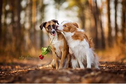 Dogs Animals Rose Dog Flowers Nature Roses