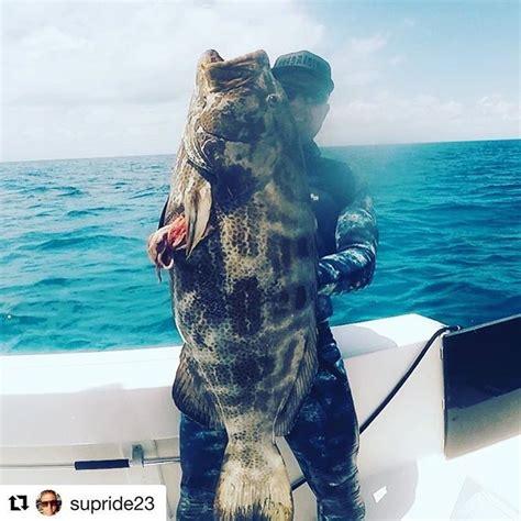 grouper monster season past student opening