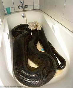 Maths teacher captures 17ft anaconda after it ate his ...