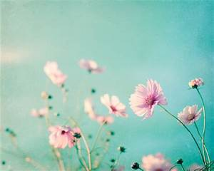 Flower Photography aqua blue pink wall art floral photo