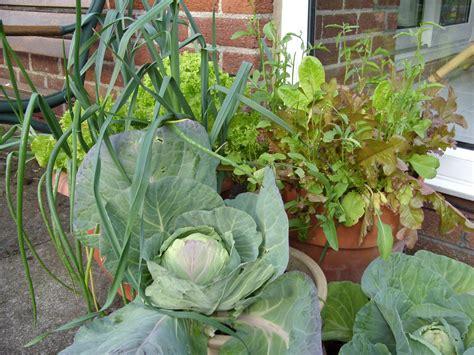 Kellis Northern Ireland Garden Salad Container Gardening