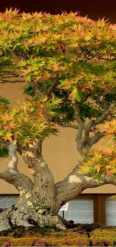 Bonsai 4k Earth Wallpapers Samsung Iphone J8