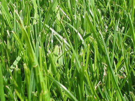 of grass grass wikiquote
