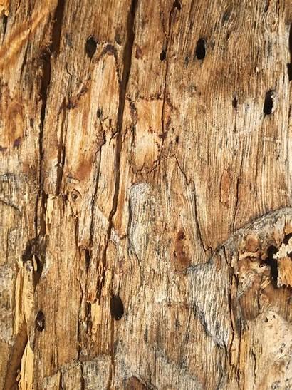 Texture Wood Tree Grain Textures Dead Bark