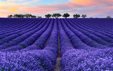 nature colorful photography lavender wallpapers hd