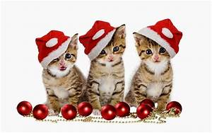Lovely, Cute Kittens and Puppies: Christmas kittens