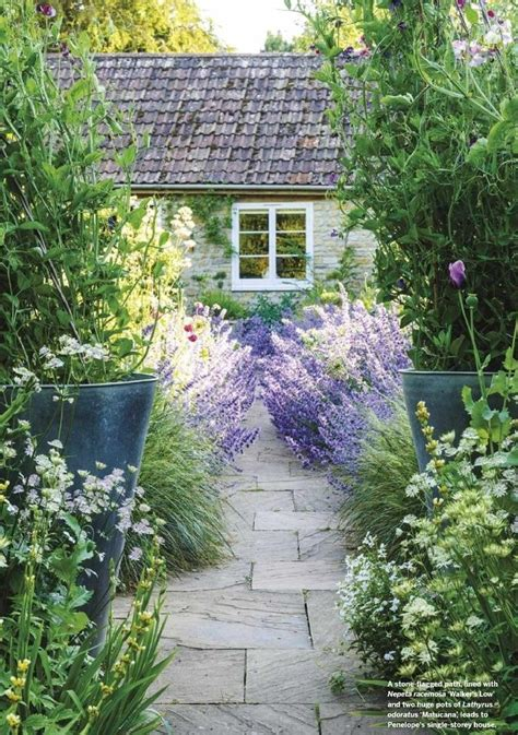 garden path  lavender gorgeous lavender bushes