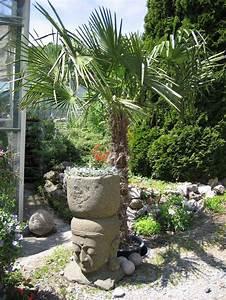 Palmen Für Die Wohnung : palmen bananen garten pflanzen bambuswald bambus und pflanzenshop f r haus und garten ~ Markanthonyermac.com Haus und Dekorationen