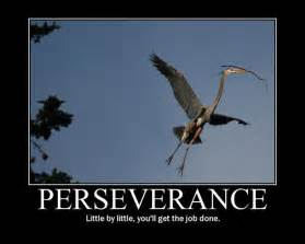 Photography About Perseverance